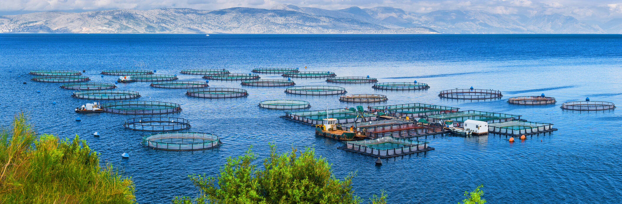 "Open call ""Sustainable Aquaculture"