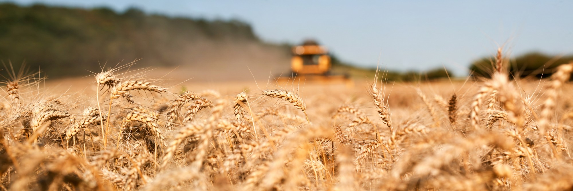 Interplay between different wheat cultivars and novel biostimulants to increase quality and yield in different agroclimatic conditions