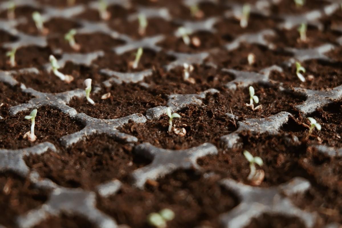 Seedbed Incubator