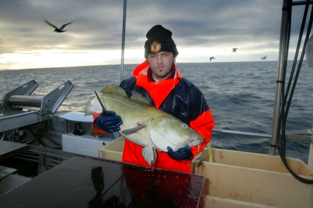 TRACOD – Model-based Tracking of Cod and Other Fish Value Chain for Consumer Confidence Boosting and Food Engineers Education