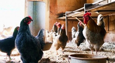 Animal Feed Production: Feed Quality & Safety