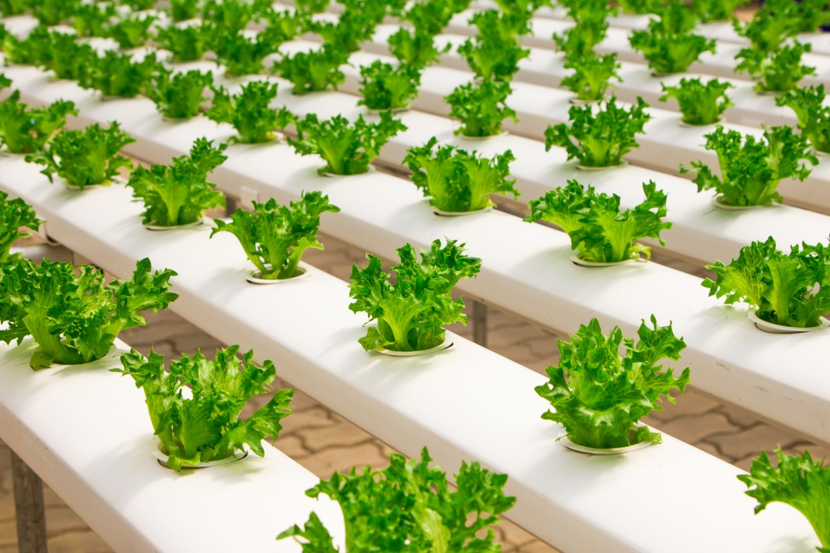 Sustainable Food Systems - Entrepreneurial Summer School 2019
