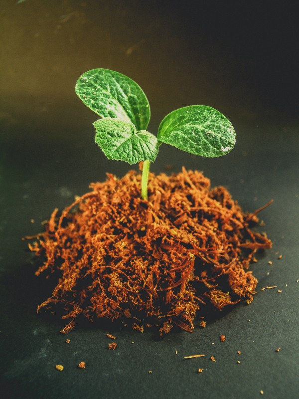 From waste to worth: use of plant residues
