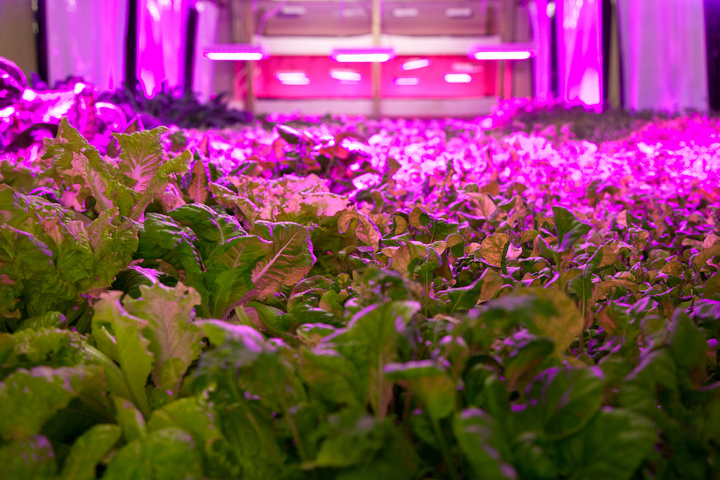 July 5 event: Re-visioning Vertical Farming!