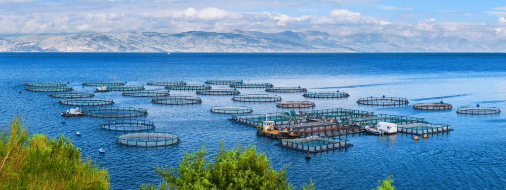 EIT Food hosts Sustainable Seafood Panel