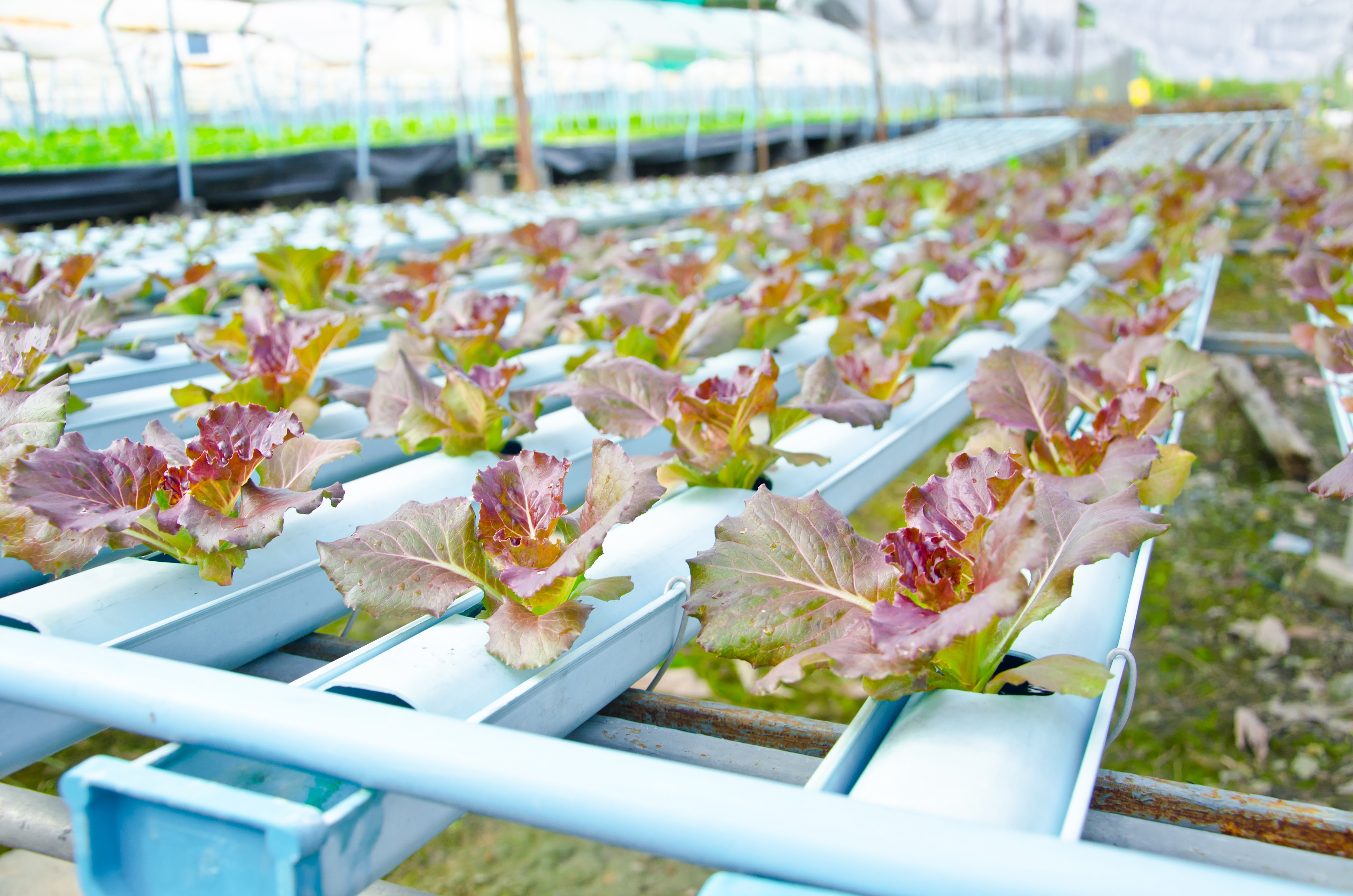 Food Industry Encouraged to Innovate with New Novel Food Regulation