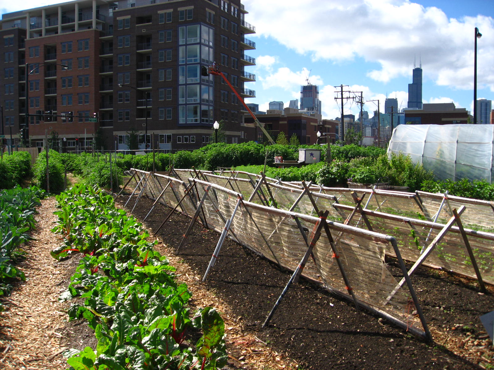 Making sense of the terms in Vertical Farming