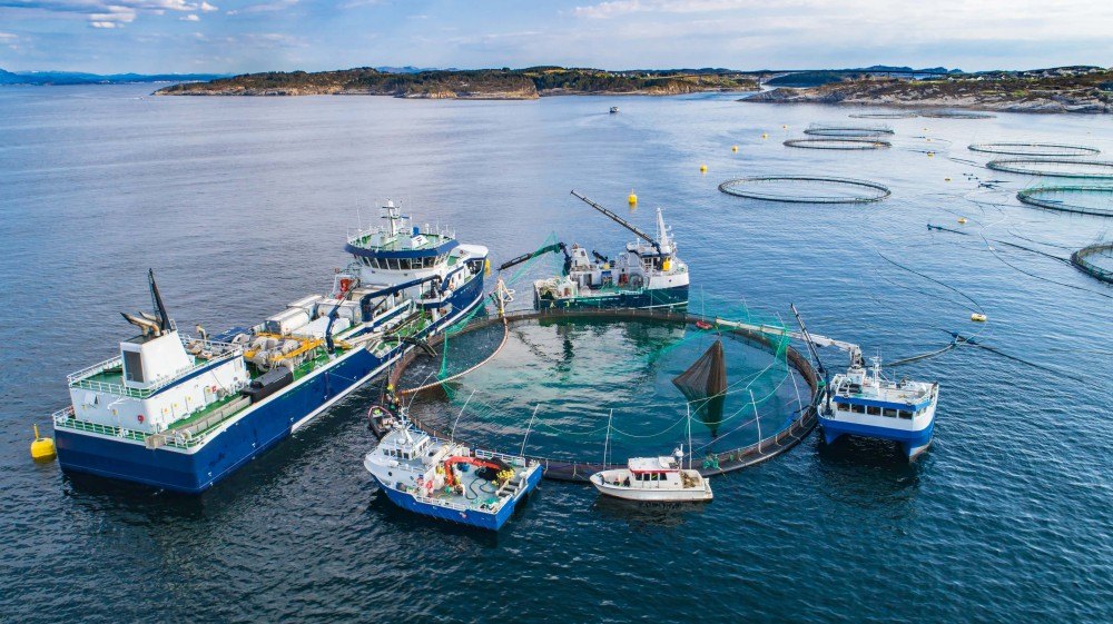 "EIT Food to launch open call ""Sustainable Aquaculture"""