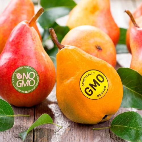 Battle of the Labels: How should the EU update food packaging labels to encourage healthier choices?