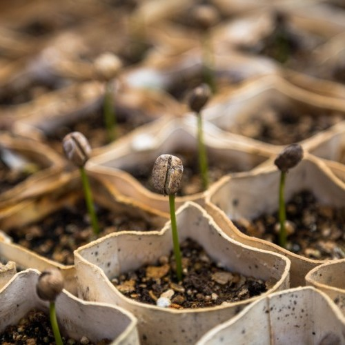 Seedbed 2020: Where do we need innovation and what makes a good Seedbed programme team?