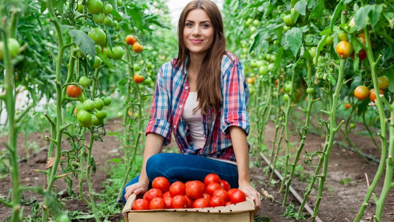 Call for proposals to carry out activities to build entrepreneurial capacities for women in the agrifood business