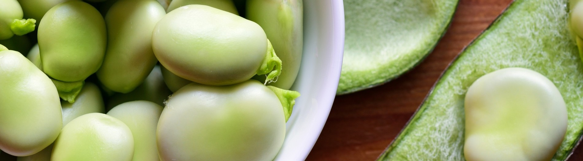 Favuleux: Developing Fava bean as a sustainable source of high quality protein for food, through optimized genetics, farming & processing
