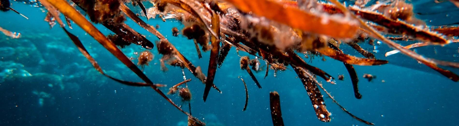 Fermented seaweed based novel feed additives - SEAFEED 2020