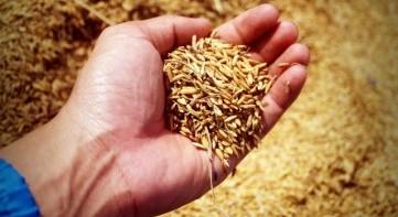Constituent sensing of small grains