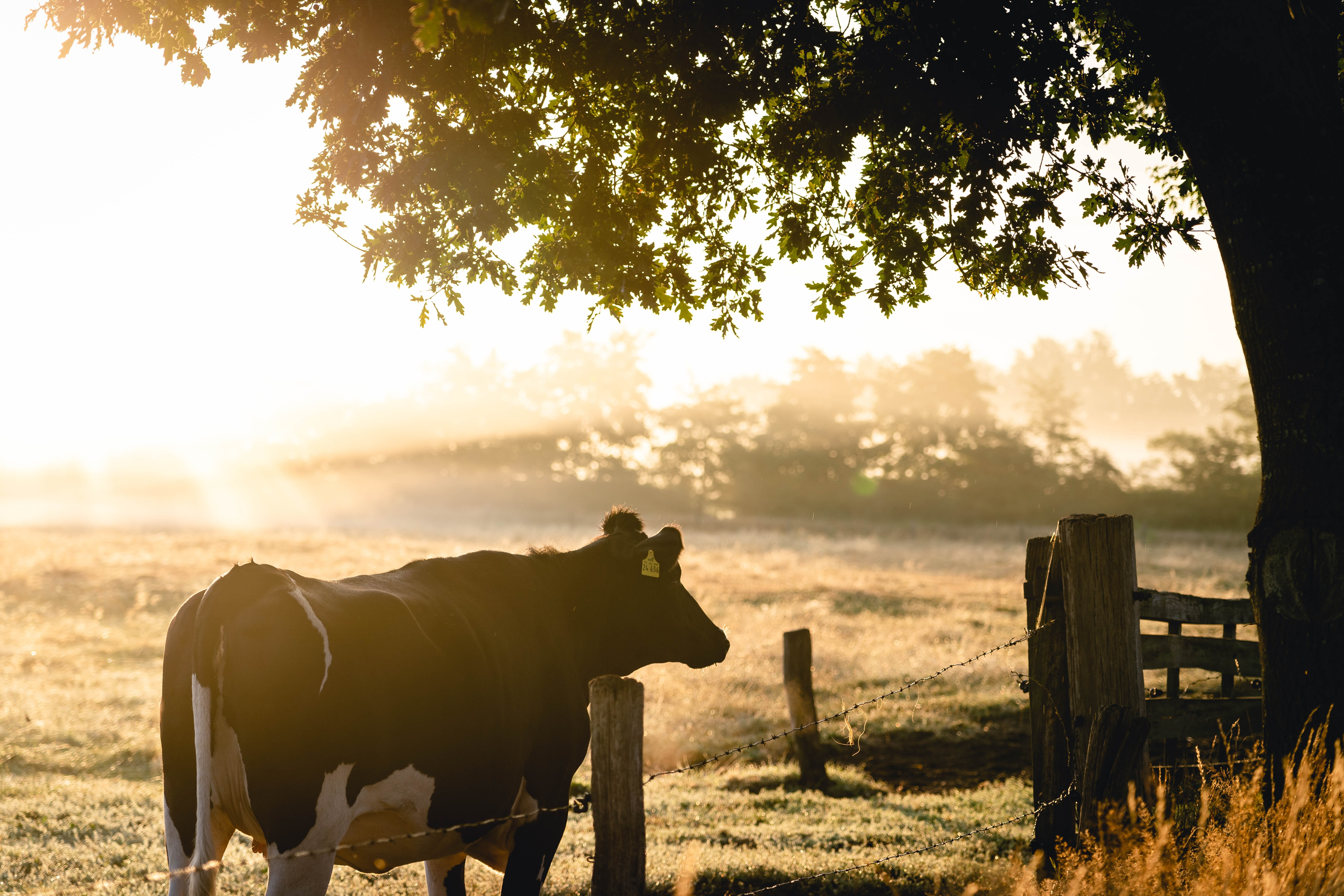 Farm to Fork: Sustainable Food Production in a Changing Environment