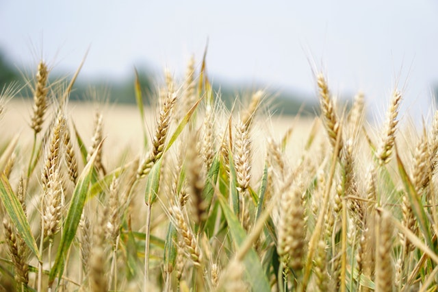 Innovation in Arable Farming: Technologies for Sustainable Farming Systems
