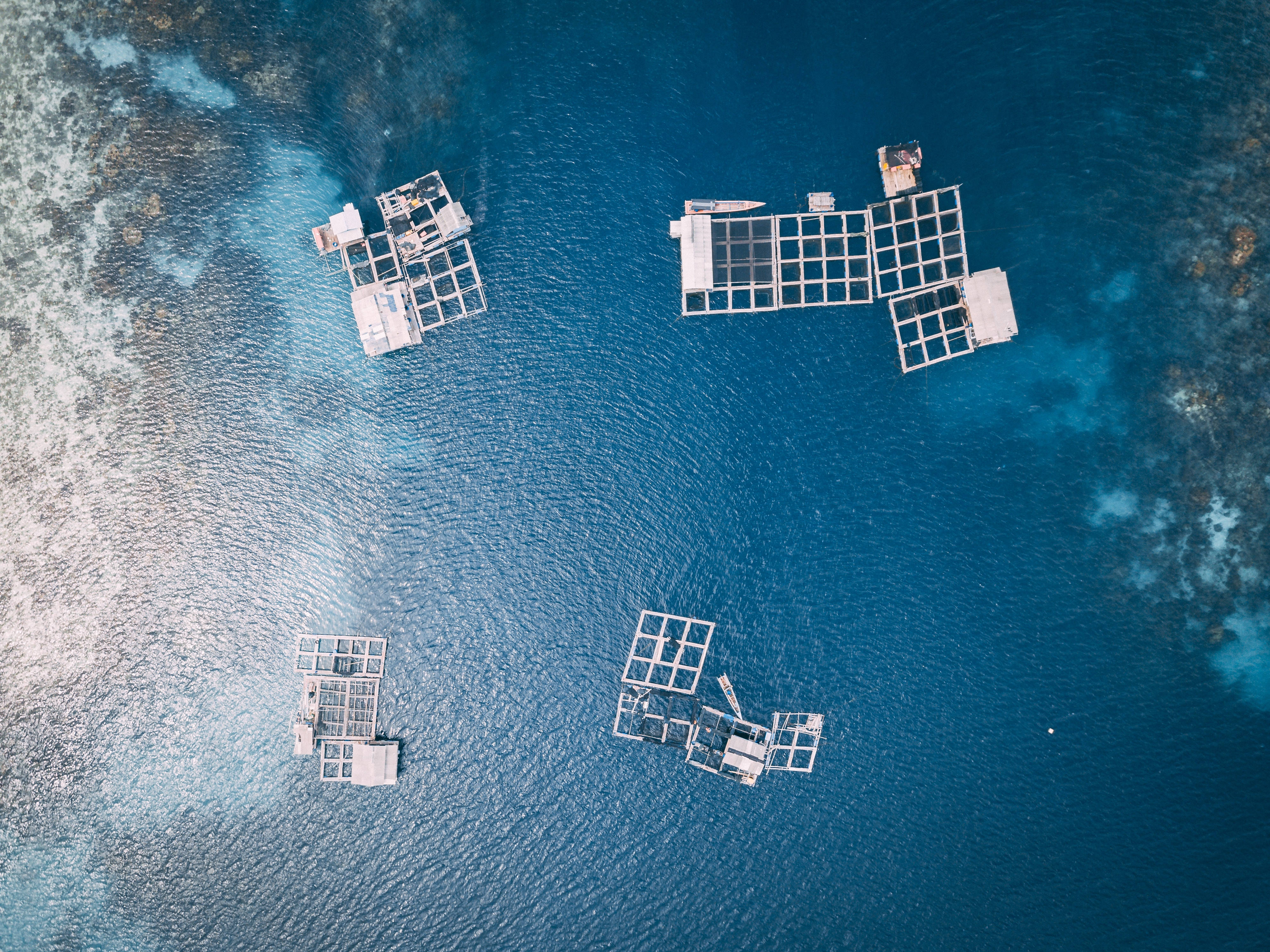MIDSA - MIcroencapsulated Diets for Sustainable Aquaculture