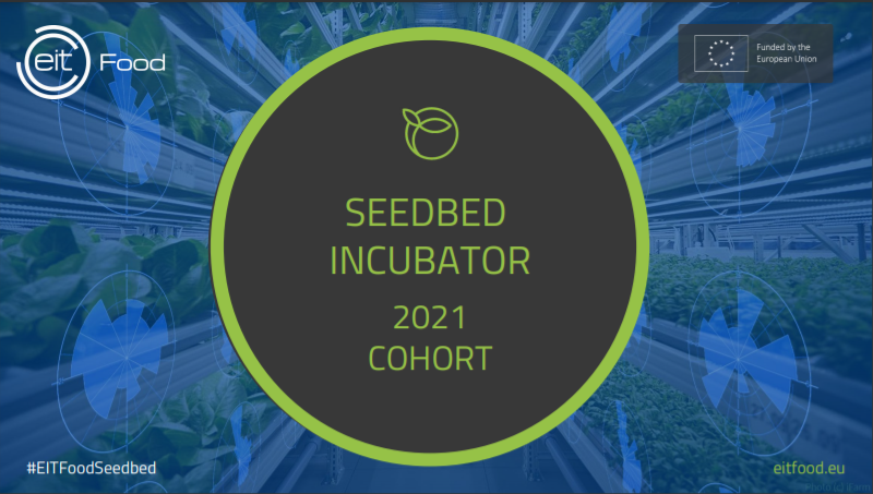 Meet our new Seedbed Incubator Cohort